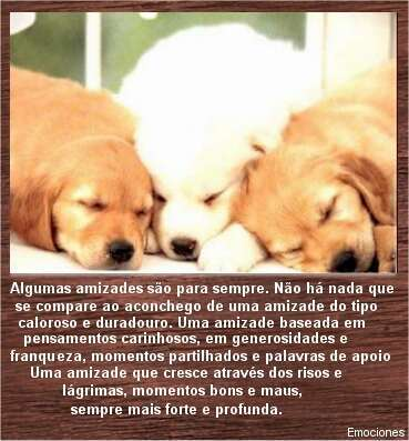 Animais - Graphics, Graficos e Glitters Para Orkut