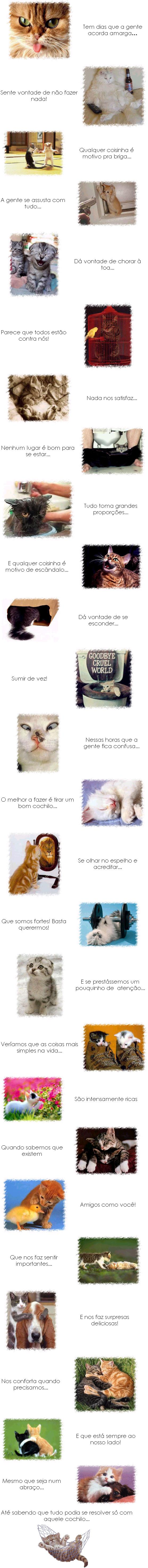 Gatos - Graphics, Graficos e Glitters Para Orkut